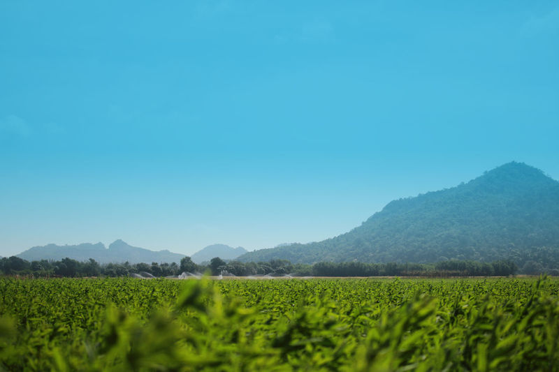 Scenics - Nature Tranquil Scene Environment Plant Growth Tranquility Mountain Copy Space Outdoors Plantation Crop  Rural Scene Nature Sky Agriculture Land Beauty In Nature Landscape No People Mountain Range Field Green Color Farm
