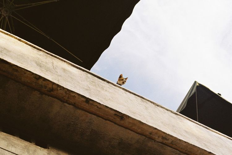 Low Angle View Of Cat On Rooftop
