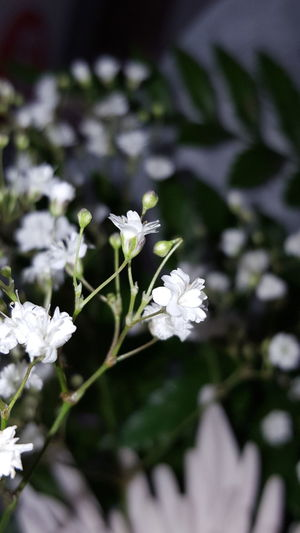Flower Nature Beauty In Nature White Color Growth Plant Petal Freshness Flower Head Springtime Close-up Fragility Leaf Pollen No People Outdoors Day