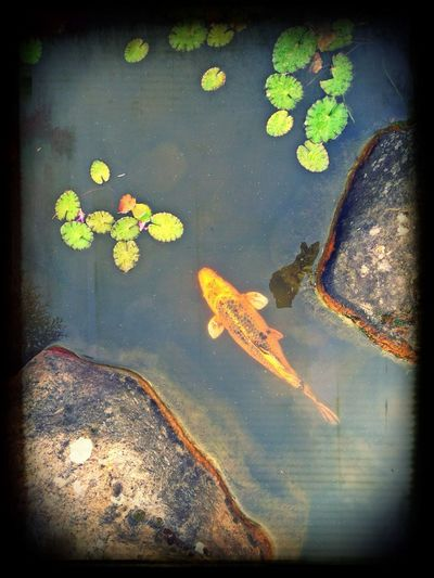 Suivez le guide... Fish Gardening Serenity... Water