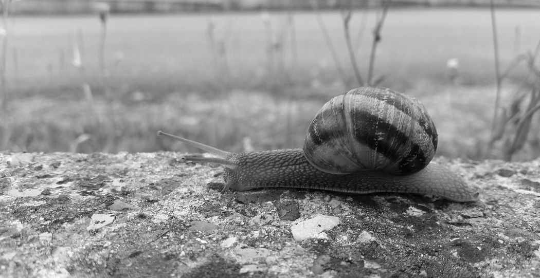 Blackandwhite Black & White Snail ❤ Snail🐌 Snails Chiocciola Chiocciole Animals Animal_collection Animal