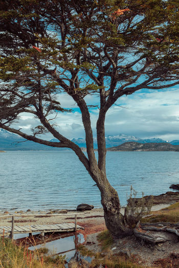 Nature Tierra Del Fuego Travel Wanderlust Argentina Bare Tree Beagle Channel Beauty In Nature Branch Day Dead Tree Horizon Over Water Lone Nature No People Outdoors Scenics Sea Sky Tranquil Scene Tranquility Travel Destinations Tree Tree Trunk Water