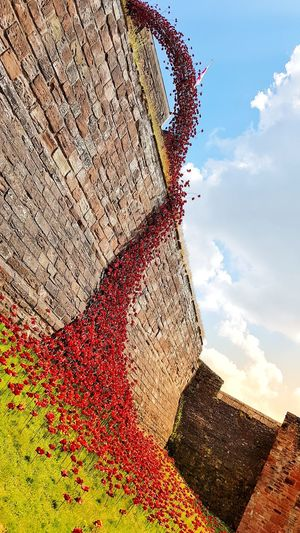 weeping window to remember the fallen Clouds Cloud - Sky Castle Carlisle Cumbria Poppies  Weeping Window History Old Fallen Remembrance Art Sculpture