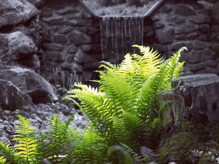Close-up of fern by rocks