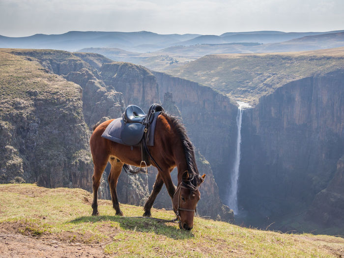 Basuto horse grazing in front of Maletsunyane Waterfall in mountain kingdom Lesotho Horseriding Lesotho Pony Activity Adventure Africa Animal Themes Basutho Basuto Beauty In Nature Day Domestic Animals Grass Horse Landscape Livestock Mammal Mountain Mountain Range Nature No People One Animal Outdoors Sky Standing
