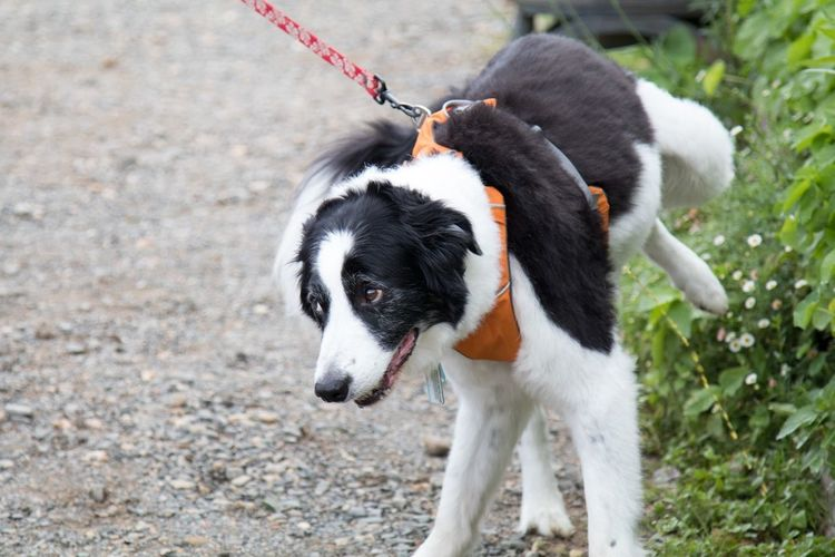 Animal Animal Head  Animal Themes Canine Dog Dog Pee Dog Peeing One Animal Outdoors Pee Pets