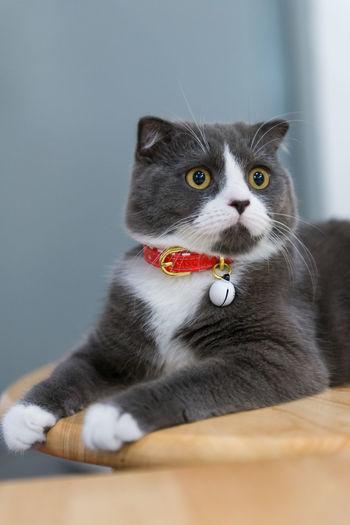Portrait of cat sitting on carpet