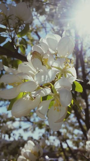 Blossom White Blanc Spring Has Arrived Beauty Simple