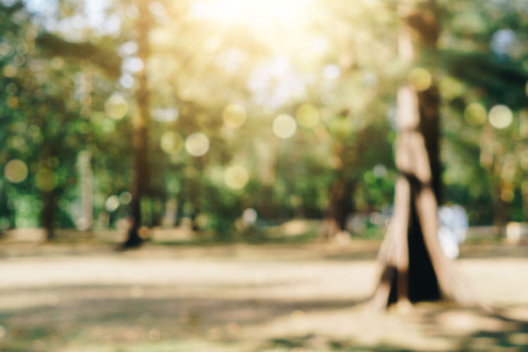 Defocused image of trees in park