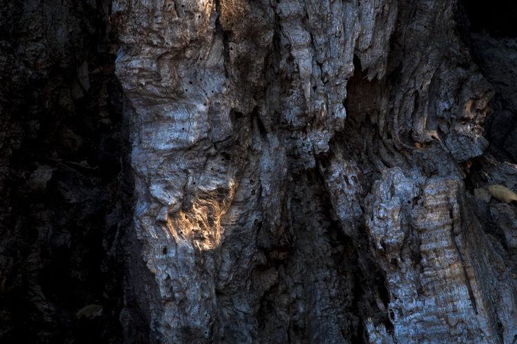 Full frame of tree trunk