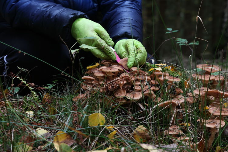 Hand holding mushroom growing on field