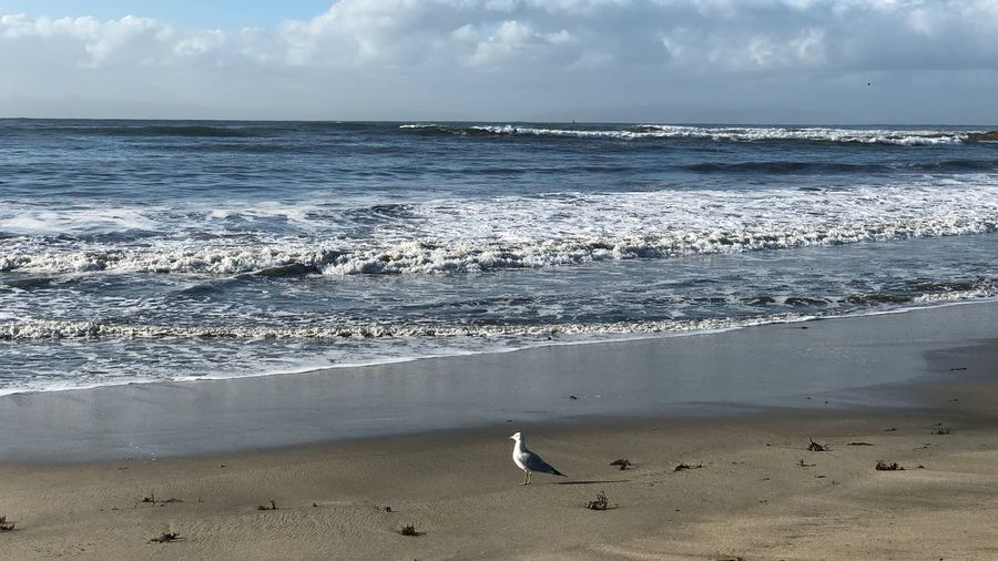 Great view Morning Good Morning Nature Photography Nature_collection Ocean Beach Water Land Sea Beauty In Nature Sky Scenics - Nature Bird Horizon Horizon Over Water