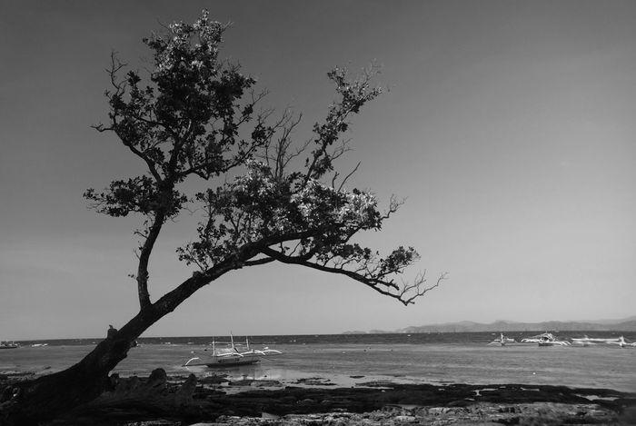Palawan Sabangbeach Philippines Monochrome Black And White Black And White Photography Tree Beach Photography