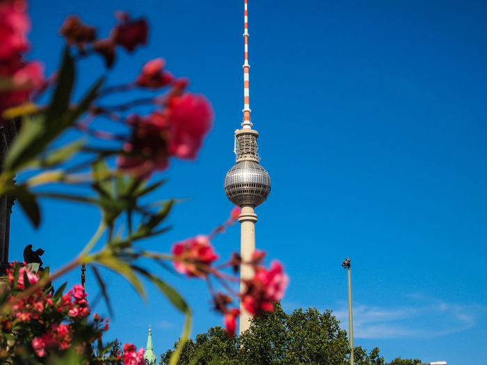Low Angle View Of Red Flowers And Fernsehturm Against Sky