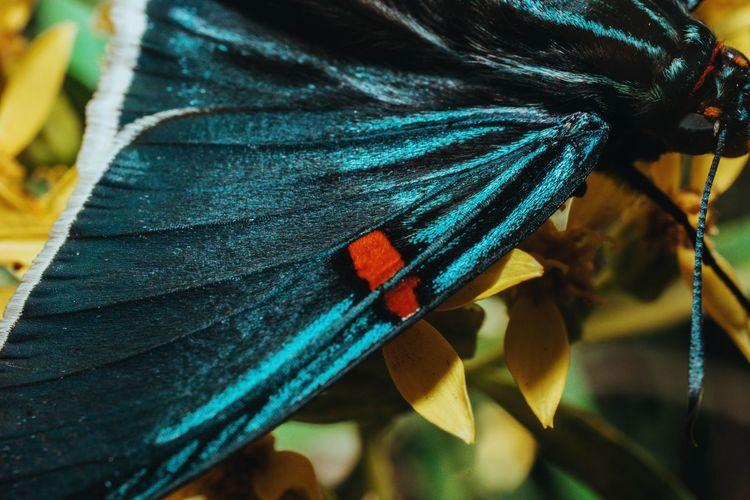 Wing Butterfly