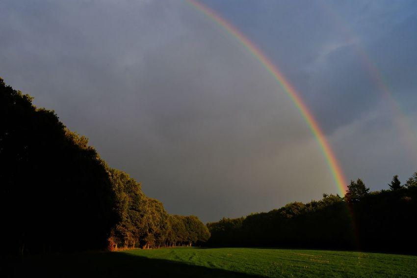 Drenthe the Netherlands Tree Spectrum Multi Colored Refraction Rainbow Double Rainbow Sky Weather Scenics Countryside Rainy Season