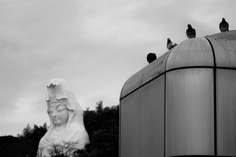 Japanese Buddha Birds Black And White Blackandwhite Day Japan Japan Photography Japanese Culture Japanese Temple No People Outdoors Sculpture Sky Travel Destinations Travel Photography