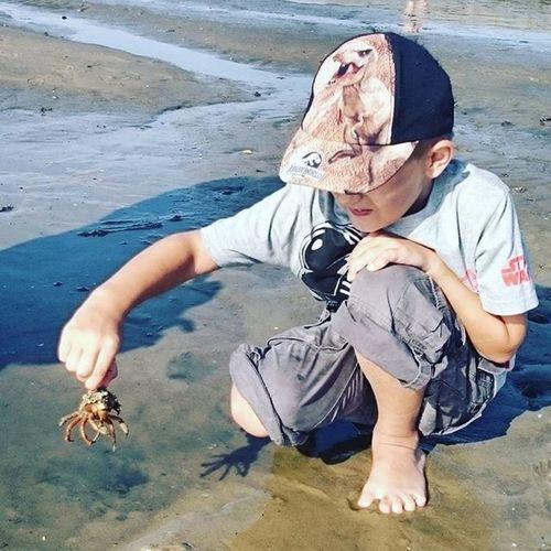 Junior  im Watt mit Krebs Cuxhaven Nordsee