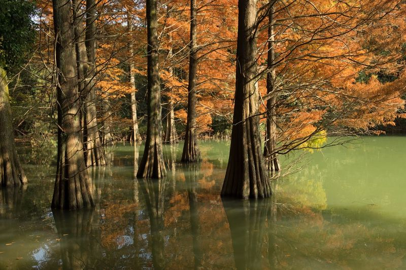 Reflection Tree Nature Forest Water Outdoors Beauty In Nature Autumn Japan My Favorite Place Eye Em Nature Lover