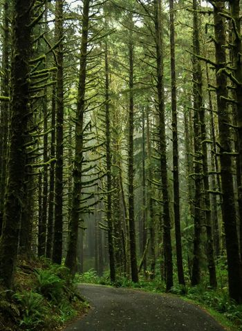 Forest Tree Nature Growth Abundance WoodLand Tranquility Beauty In Nature Green Color Wilderness No People Outdoors Landscape CannonEOSRebelT6i