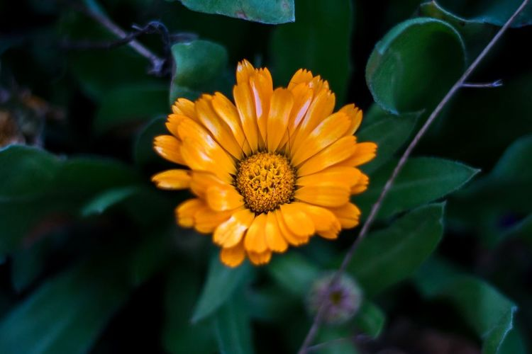 Winter Floral Beauty Flowering Plant Flower Freshness Plant Fragility Beauty In Nature Vulnerability  Growth Flower Head Petal Inflorescence Close-up Yellow Focus On Foreground Nature Plant Part Leaf Pollen No People Day