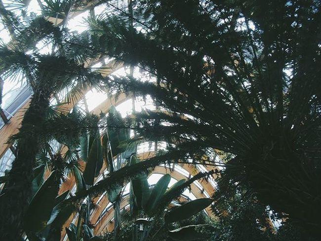 Sheffield Wintergarden Plant Plants Flora Nature Architecture Film Filmphotography Filmisnotdead 35mmfilm 35mm