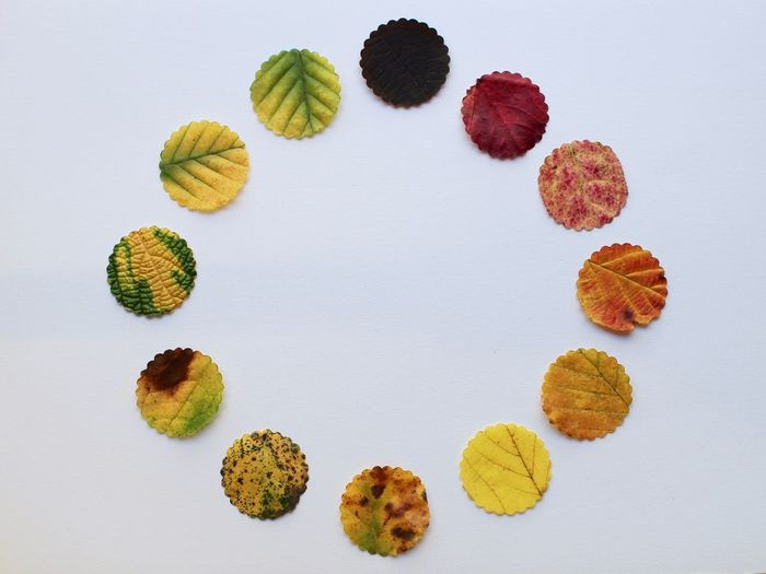 Directly Above View Of Leaves On White Background
