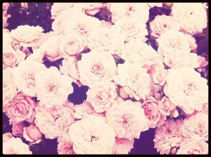 Pretty Flower<3
