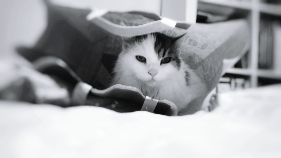 Hexe in the bag Hexe Hexe-Baby Cat Cat♡ Cutestcatever Catphotography Blackandwhite Photography Blackandwhitephotography Cutestcatintheworld Black & White Catphoto Catinthebag