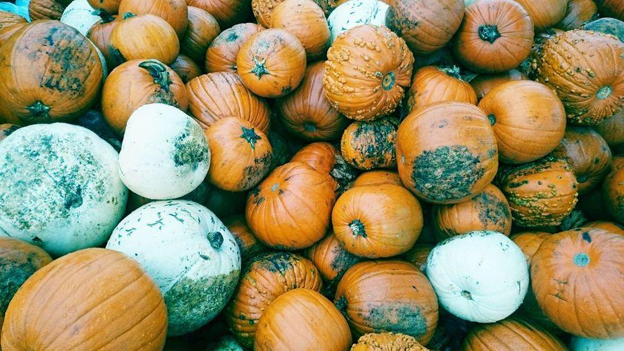 Pumpkins Vegetable