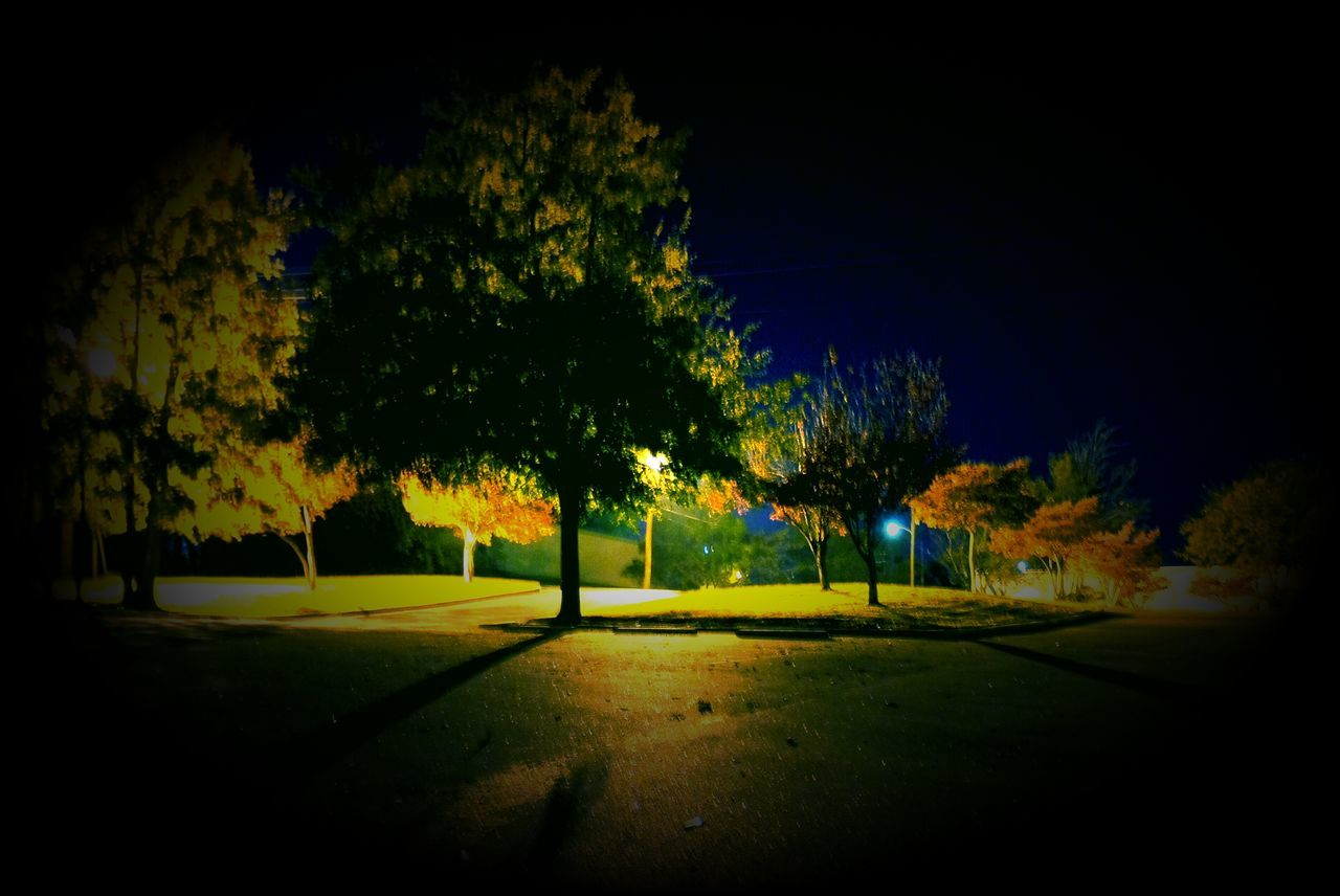 tree, nature, tranquility, night, tranquil scene, no people, beauty in nature, scenics, grass, outdoors, landscape, growth, sky, golf course