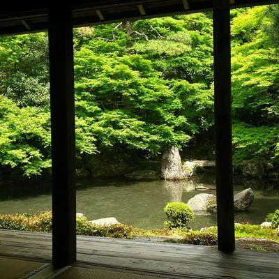 5/6 蓮華寺 もう新緑の季節やなぁ。 蓮華寺 寺 京都 Kyoto Japan 月一蓮華寺