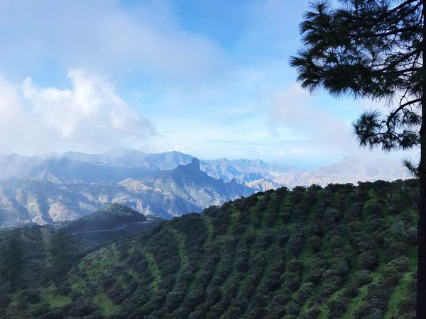 Gran Canaria Nature Landscape Field Mountain Sky Beauty In Nature No People Outdoors Tree Day Freshness