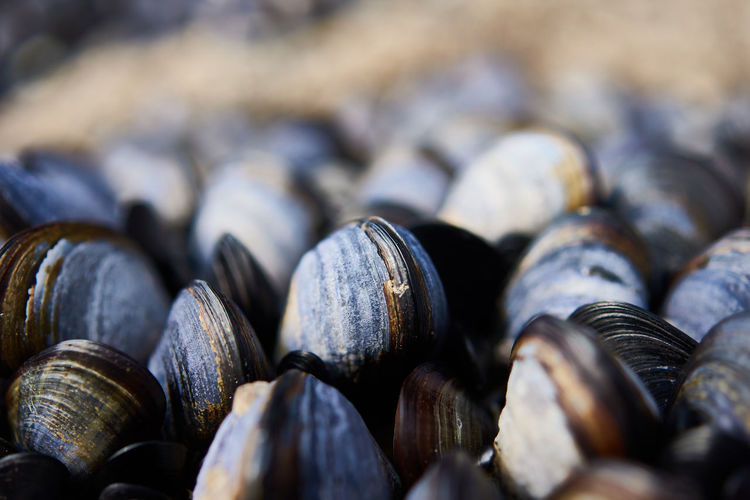Seafood Close-up Focus On Foreground Food And Drink Outdoors Sea Selective Focus Shell
