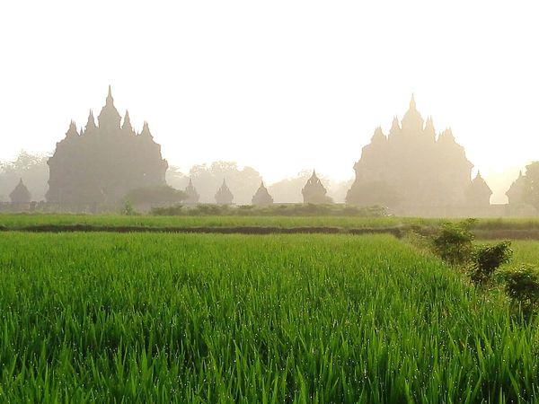 Plaosantemple Plaosan Candiplaosan Paddy Field Nature Nature Photography Buddhist Buddhist Temple Centraljava Javanese INDONESIA EyeEm Indonesia PrehistoricSunriseCatcher Heritagesite Heritagebuilding
