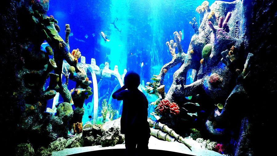 EyeEmNewHere Imagine Aquarium Fish Kids Explore Dream Underwater Colors Ocean Coral Imagination Dreams Come True Under Water World Expansion Water Background Fish Background Aquairum Background Blue Background Coral Background