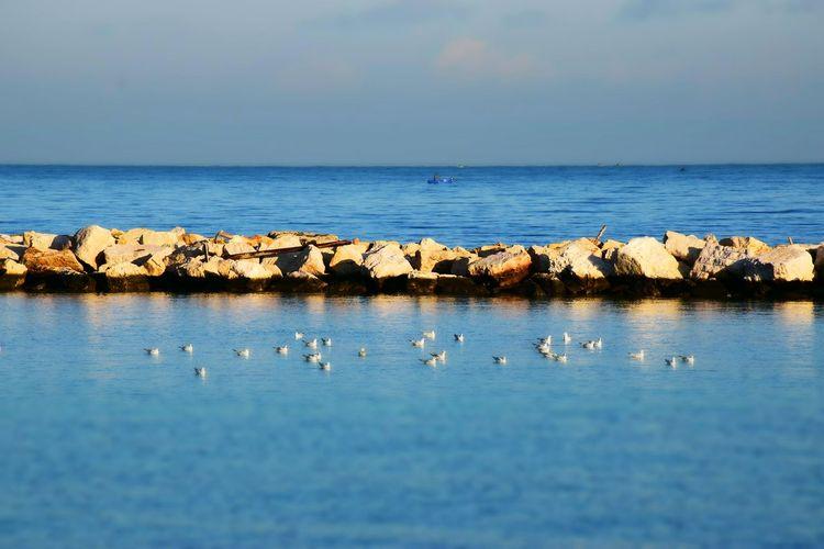 Birds in sea against sky