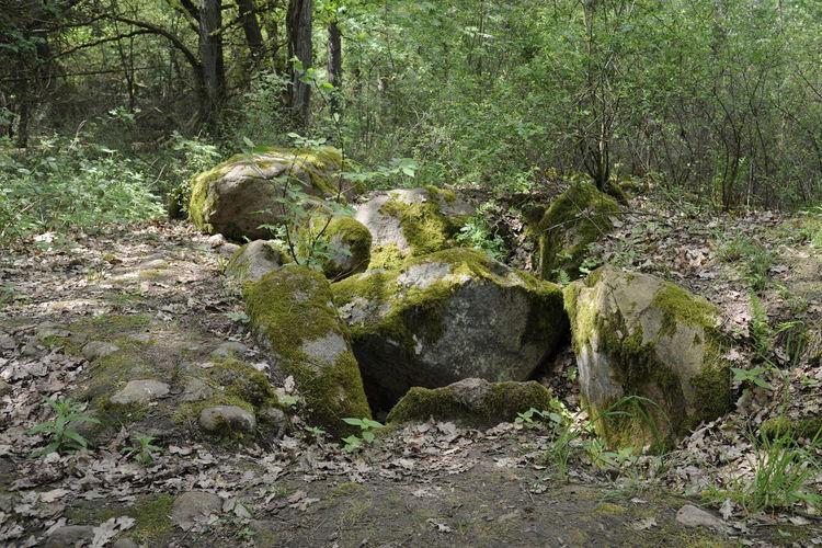 Grab Grab Bei Bornhof Großsteingrab Steingrab Megalithgrab Mindestens 5.000 Jahre Alt