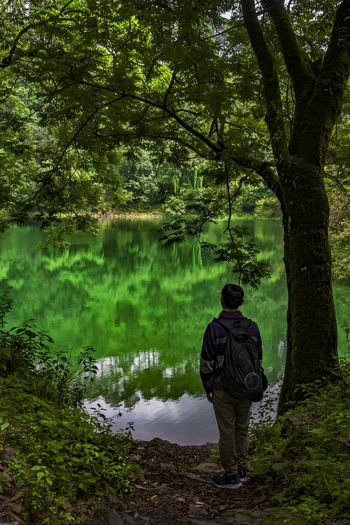 Rear view of man standing by lake in forest