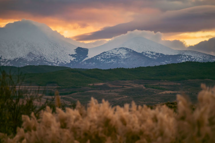 Pale reeds against agricultural fields leading to snow-capped mountains wreathed in cloud.