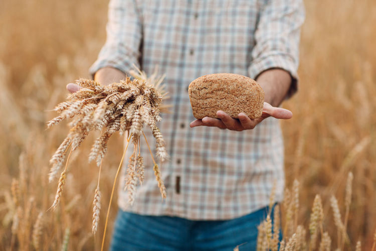 Midsection of man holding crops at field