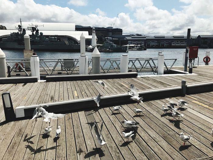 Sydney Harbour Bridge Cloudy Sky Birds At Sydney Harbour Natural Beauty Pet Portraits