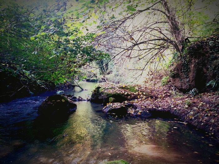 Italy Wood River Lazio,Italy