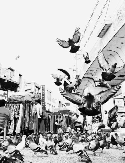 Bird The Street