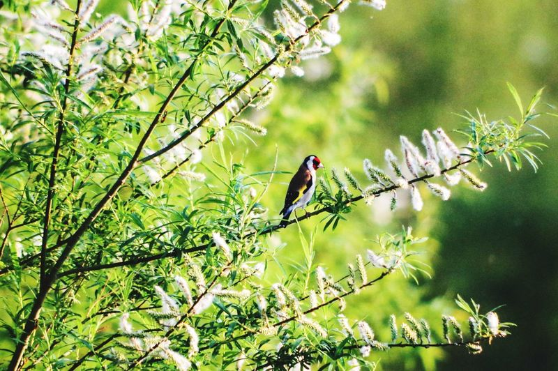 Birds Birds Of