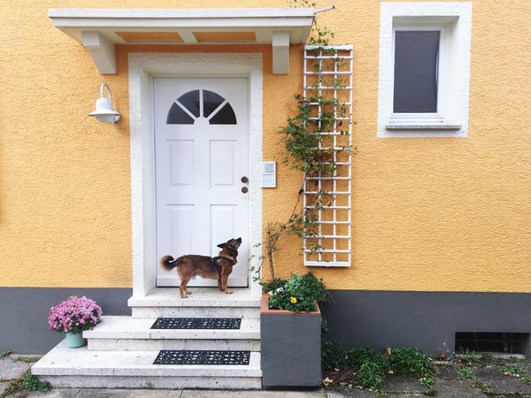 Building Exterior Architecture Built Structure House Pets Door One Animal Outdoors Day Animal Themes Window Residential Building No People Domestic Animals Doorway Dog Waiting In Front Of The Door Yellow House  wWindow Box