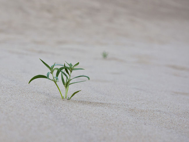Grass Green Growing Growth Life Life In Desert Nature Plant