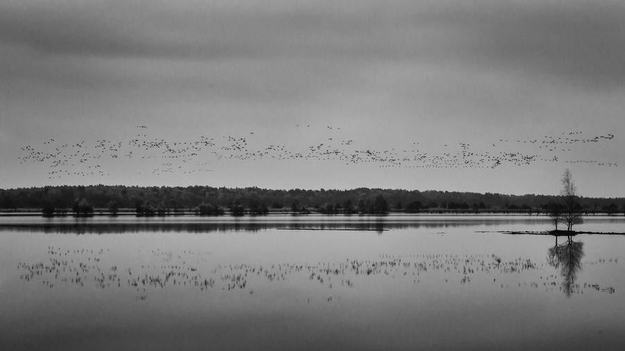Landscape Lakescape Lake Calm Black And White Birds Swarm
