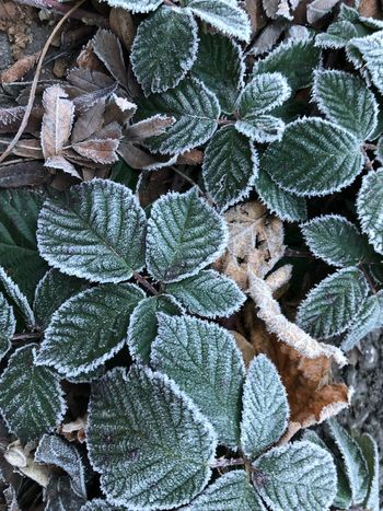 Full Frame Backgrounds No People Growth Green Color Leaf Plant Part Frost Beauty In Nature Cold Temperature Snow Plant Pattern Close-up Winter Nature Day Frozen Outdoors High Angle View