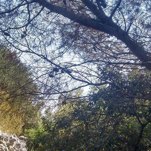 Croatia Kroatien Kroatien2015 Nofilterneeded Keinfilter Ohnefilter Urlaub Himmel Baum Bäume